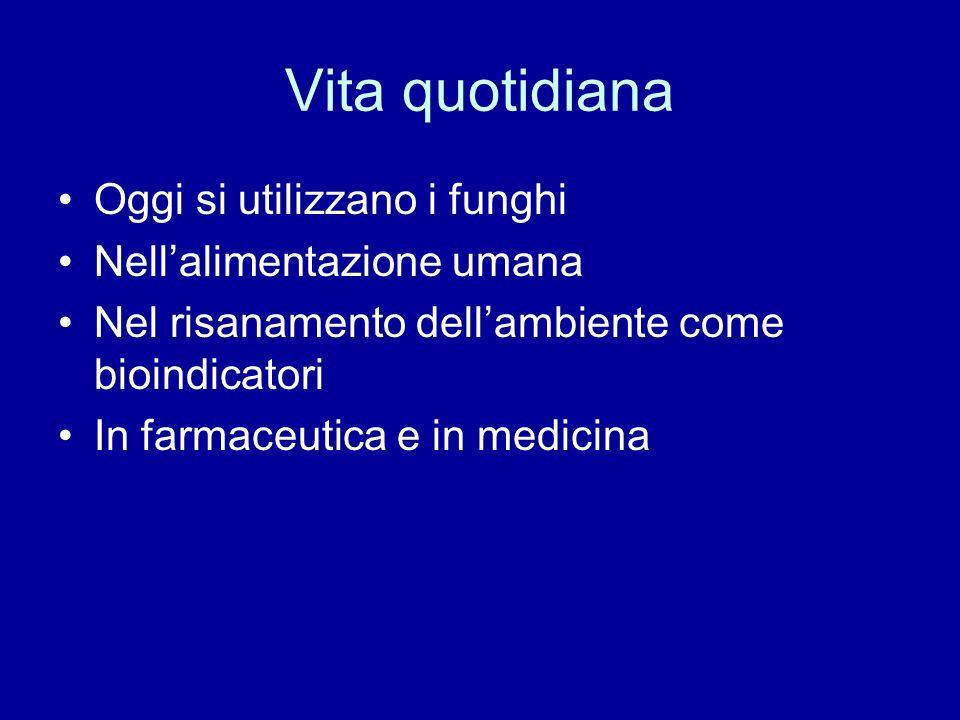 Vita quotidiana Oggi si utilizzano i funghi Nellalimentazione umana Nel risanamento dellambiente come bioindicatori In farmaceutica e in medicina