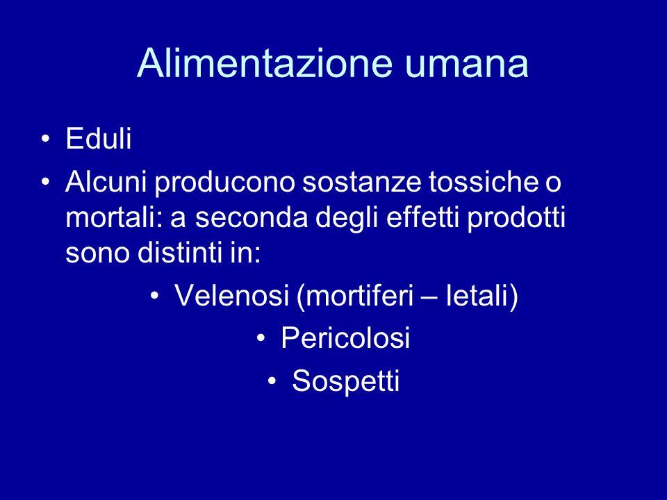 Alimentazione umana Eduli Alcuni producono sostanze tossiche o mortali: a seconda degli effetti prodotti sono distinti in: Velenosi (mortiferi – letal