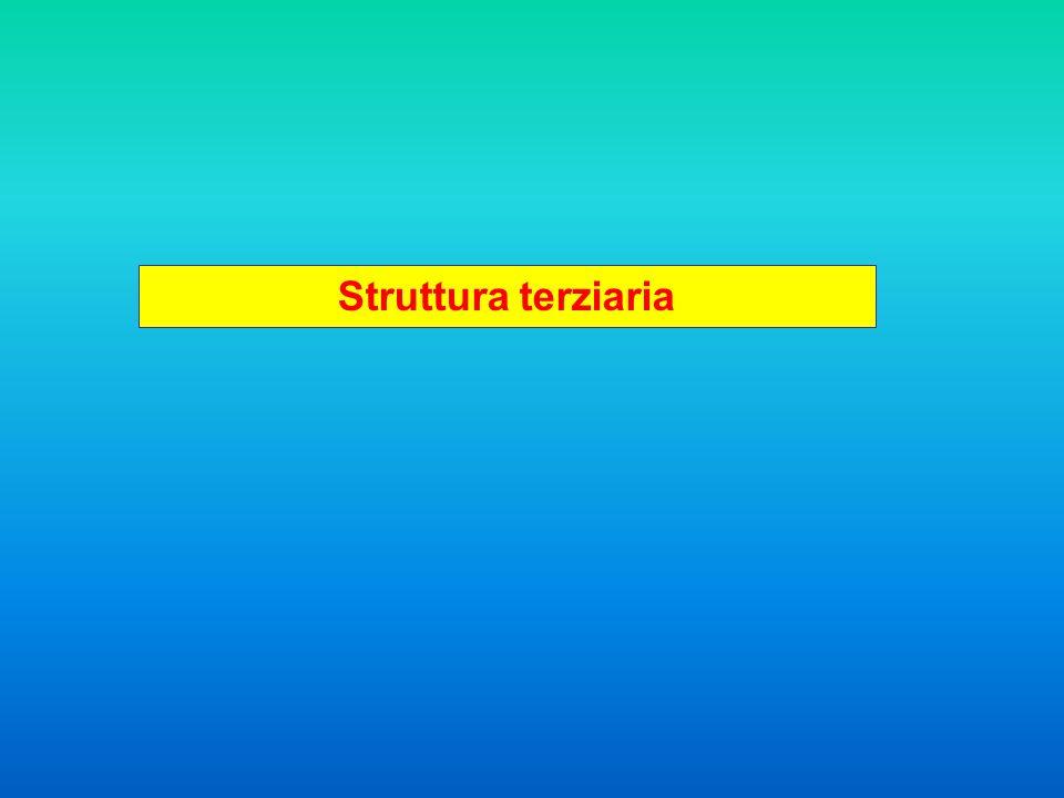 Genomi Sequenza Struttura Funzione Sequenza Struttura Funzione
