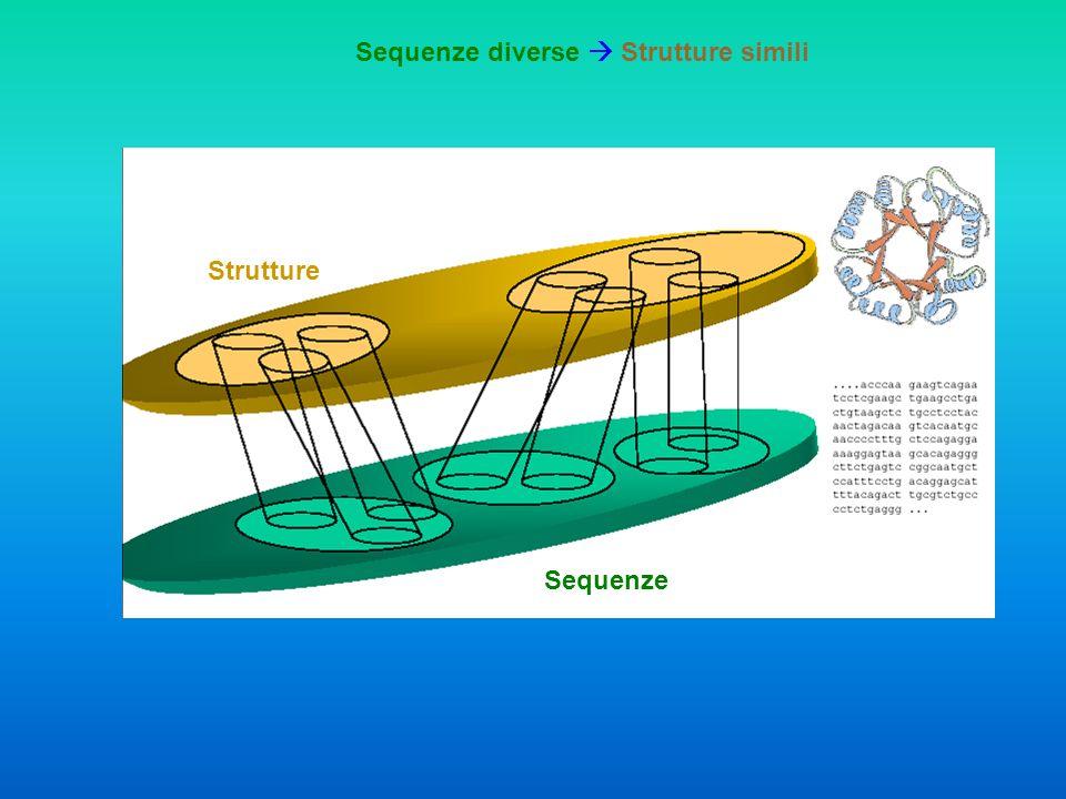 Sequenze Strutture Funzione
