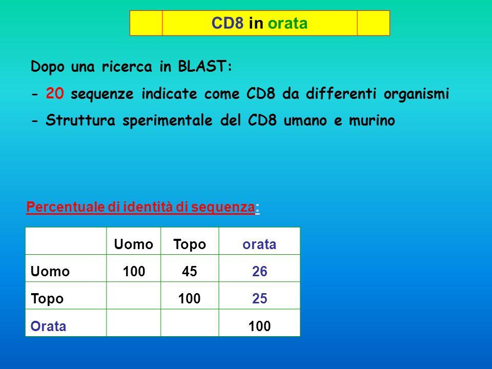 Allinemanto multiplo delle 20 sequenze di CD8