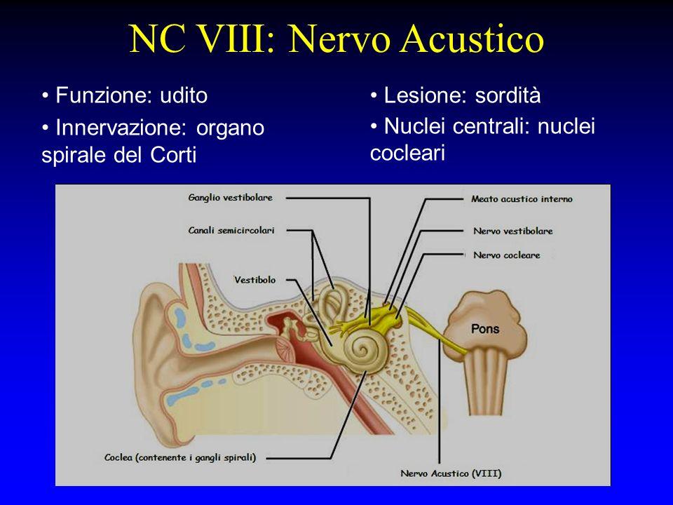 NC VIII: Nervo Acustico Funzione: udito Innervazione: organo spirale del Corti Lesione: sordità Nuclei centrali: nuclei cocleari