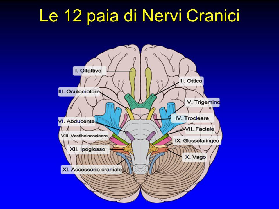 Le 12 paia di Nervi Cranici
