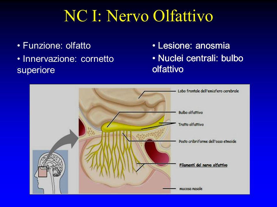 Funzione: olfatto Innervazione: cornetto superiore NC I: Nervo Olfattivo Lesione: anosmia Nuclei centrali: bulbo olfattivo Lesione: anosmia Nuclei cen