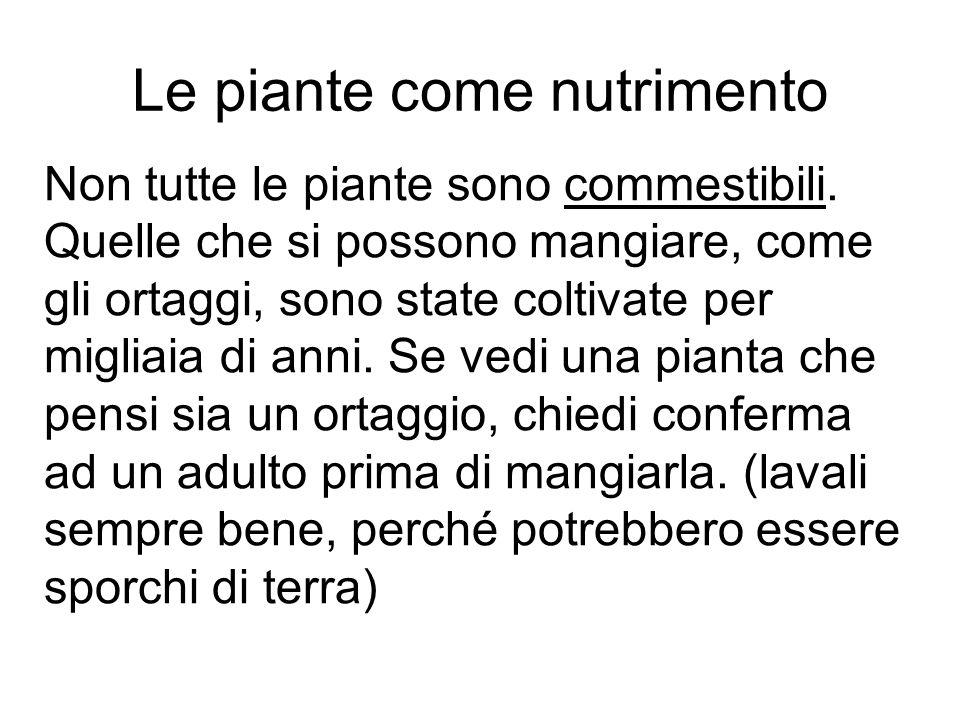 Le piante come nutrimento Non tutte le piante sono commestibili. Quelle che si possono mangiare, come gli ortaggi, sono state coltivate per migliaia d