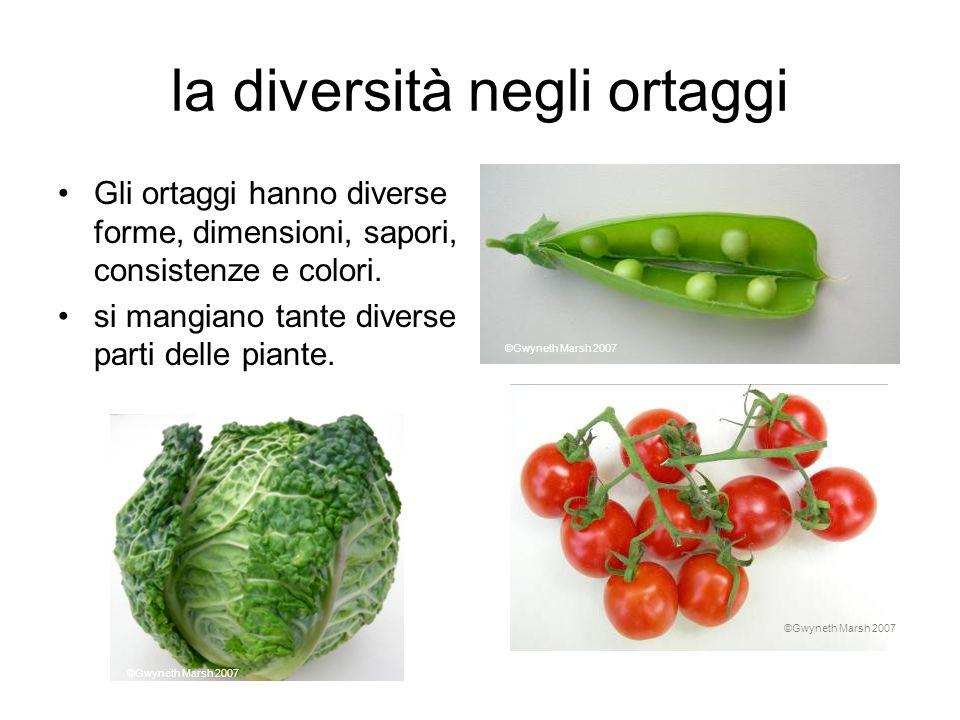 la diversità negli ortaggi Gli ortaggi hanno diverse forme, dimensioni, sapori, consistenze e colori. si mangiano tante diverse parti delle piante. ©G
