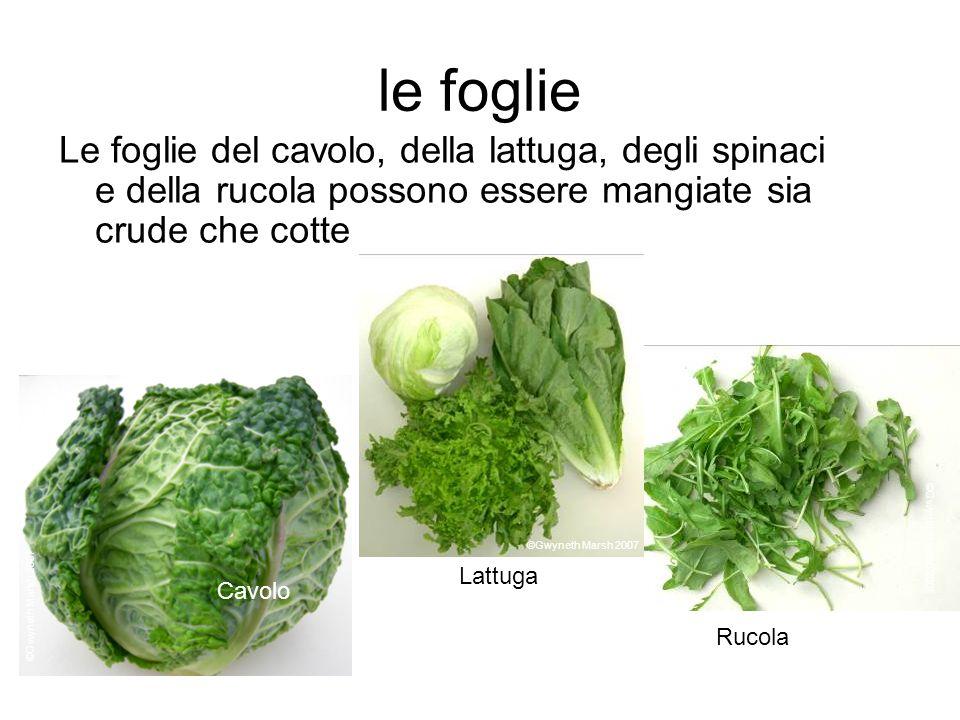 le foglie Le foglie del cavolo, della lattuga, degli spinaci e della rucola possono essere mangiate sia crude che cotte Cavolo Rucola Lattuga ©Gwyneth