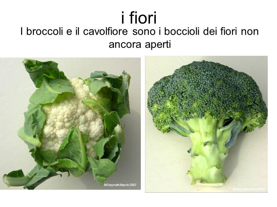 i fiori I broccoli e il cavolfiore sono i boccioli dei fiori non ancora aperti ©Gwyneth Marsh 2007