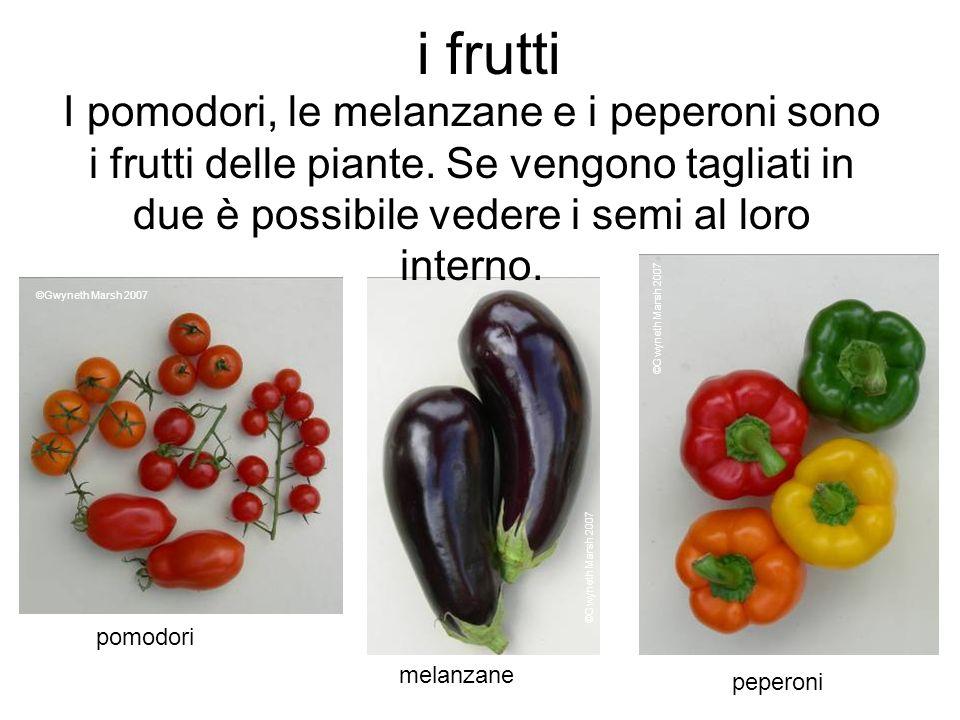 i frutti I pomodori, le melanzane e i peperoni sono i frutti delle piante. Se vengono tagliati in due è possibile vedere i semi al loro interno. ©Gwyn