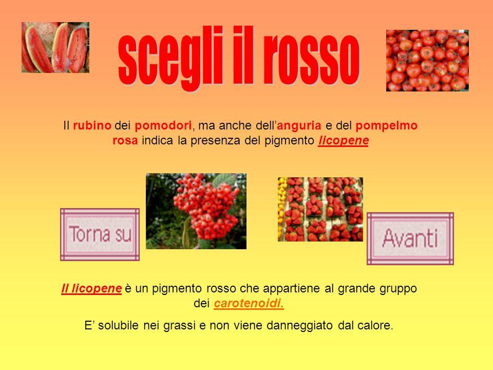 Il rubino dei pomodori, ma anche dellanguria e del pompelmo rosa indica la presenza del pigmento licopene Il licopene è un pigmento rosso che appartie