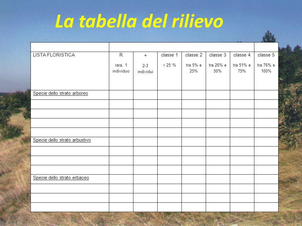 La tabella del rilievo LISTA FLORISTICA R rara, 1 individuo + 2-3 individui classe 1 < 25 % classe 2 tra 5% e 25% classe 3 tra 26% e 50% classe 4 tra