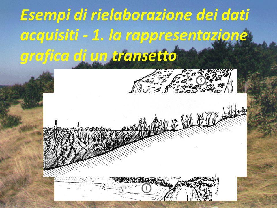 Esempi di rielaborazione dei dati acquisiti - 1. la rappresentazione grafica di un transetto
