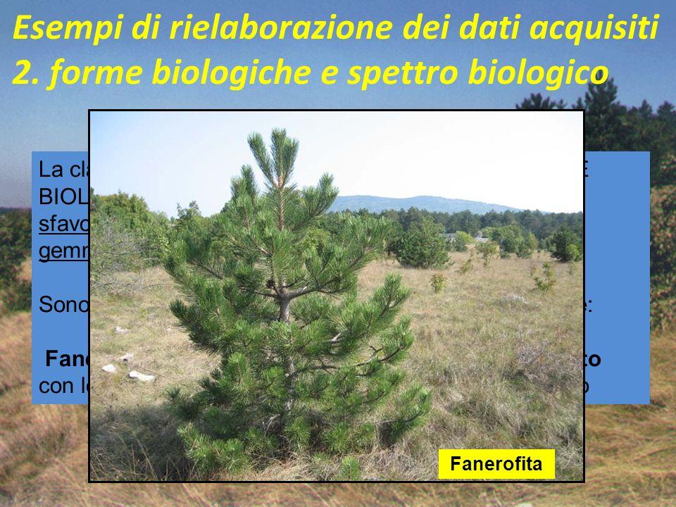 Esempi di rielaborazione dei dati acquisiti 2. forme biologiche e spettro biologico La classificazione delle piante in base alle loro FORME BIOLOGICHE