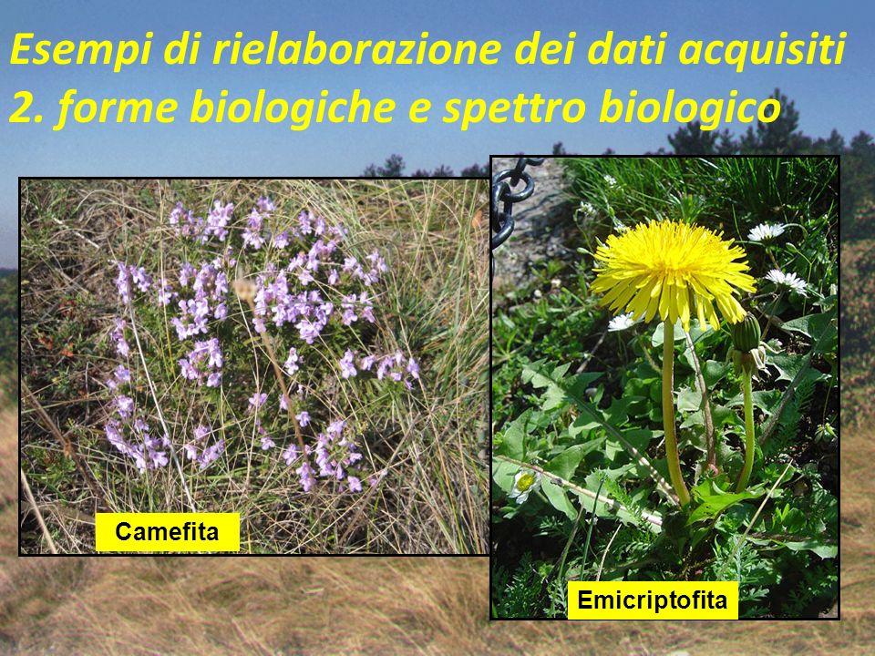 Esempi di rielaborazione dei dati acquisiti 2. forme biologiche e spettro biologico Camefita (Ch) = piccolo arbusto prostrato o pulvinato con gemme po