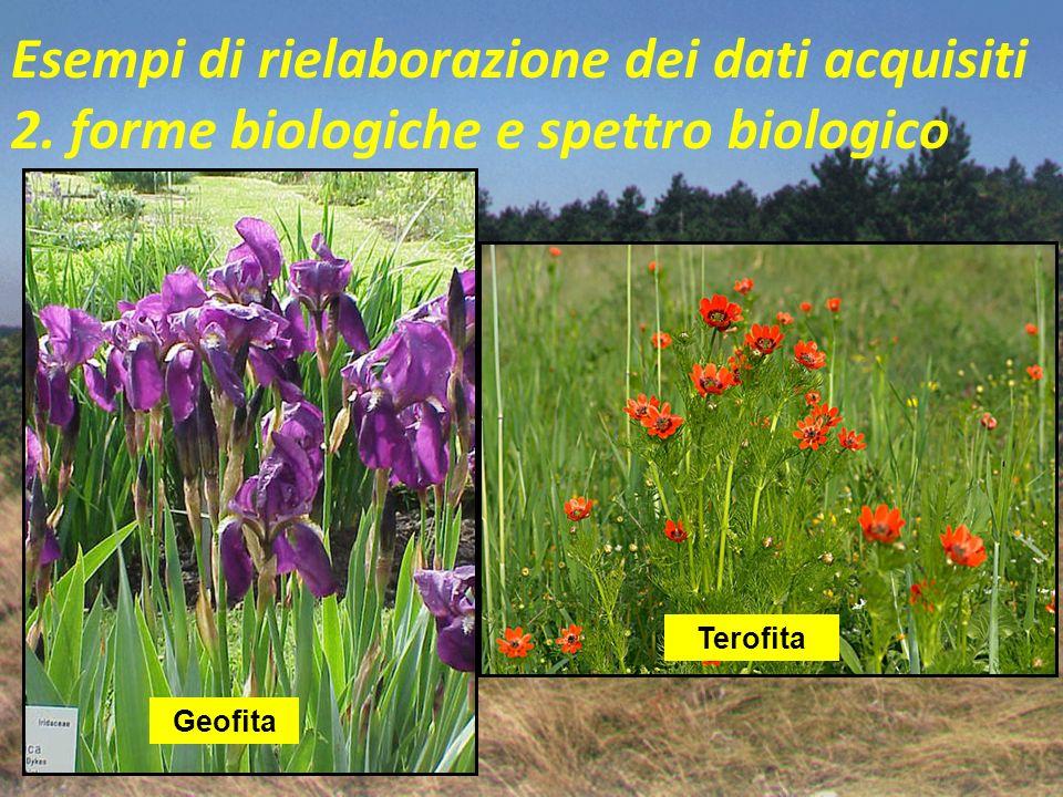 Esempi di rielaborazione dei dati acquisiti 2. forme biologiche e spettro biologico Geofita (G) pianta erbacea perenne che presenta organi sotterranei