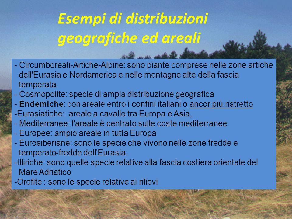 Esempi di distribuzioni geografiche ed areali - Circumboreali-Artiche-Alpine: sono piante comprese nelle zone artiche dell'Eurasia e Nordamerica e nel
