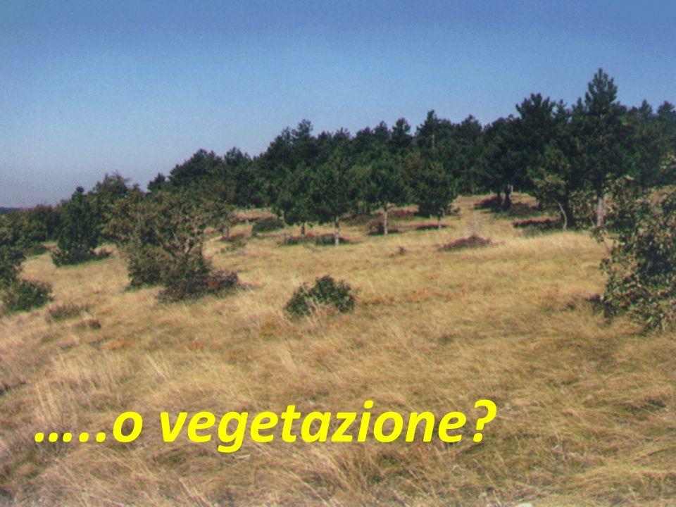 …..o vegetazione?