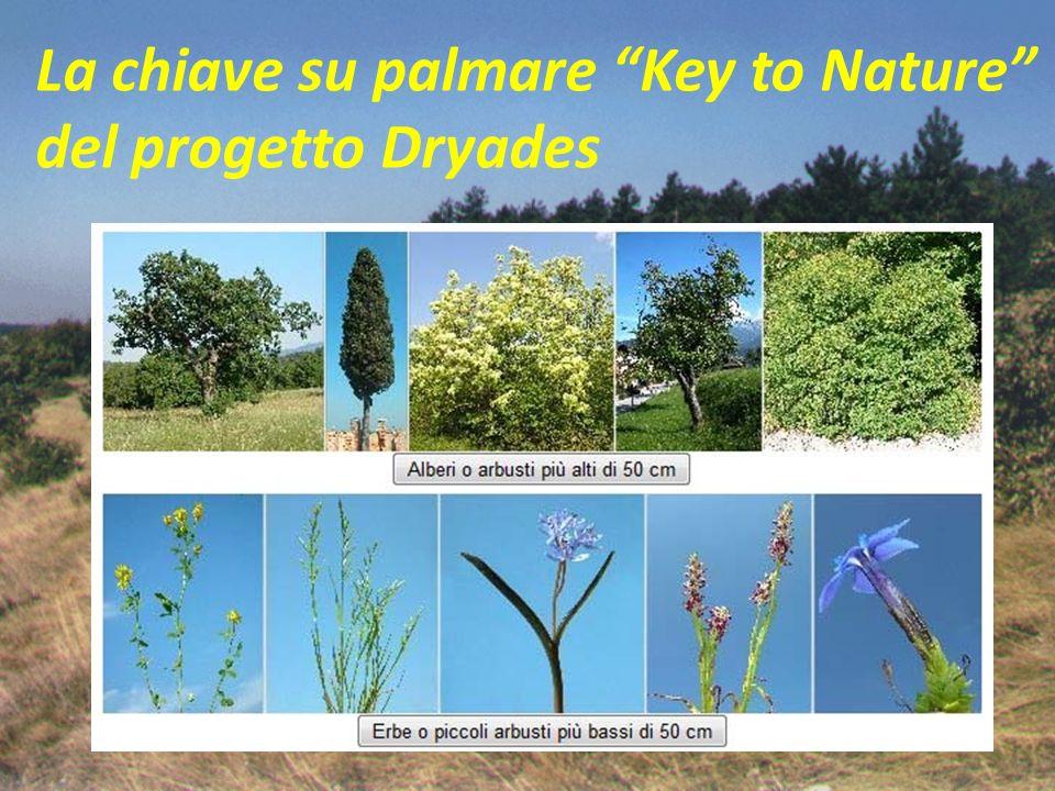 La fitosociologia è la scienza che studia il manto vegetale nella sua composizione ed i rapporti di questo con i fattori ambientali.