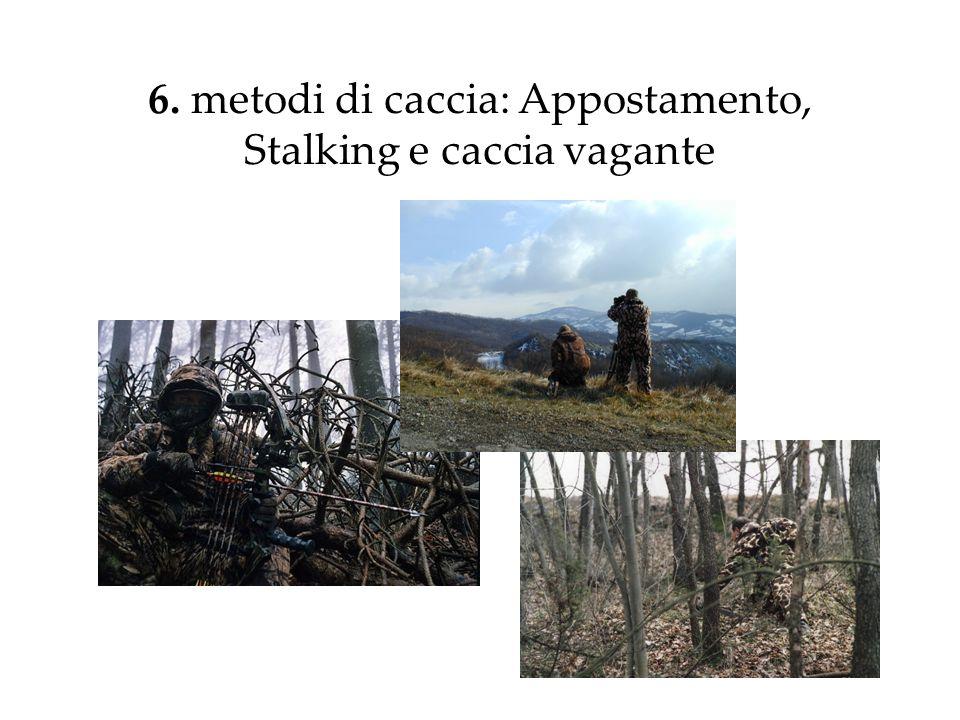 6. metodi di caccia: Appostamento, Stalking e caccia vagante