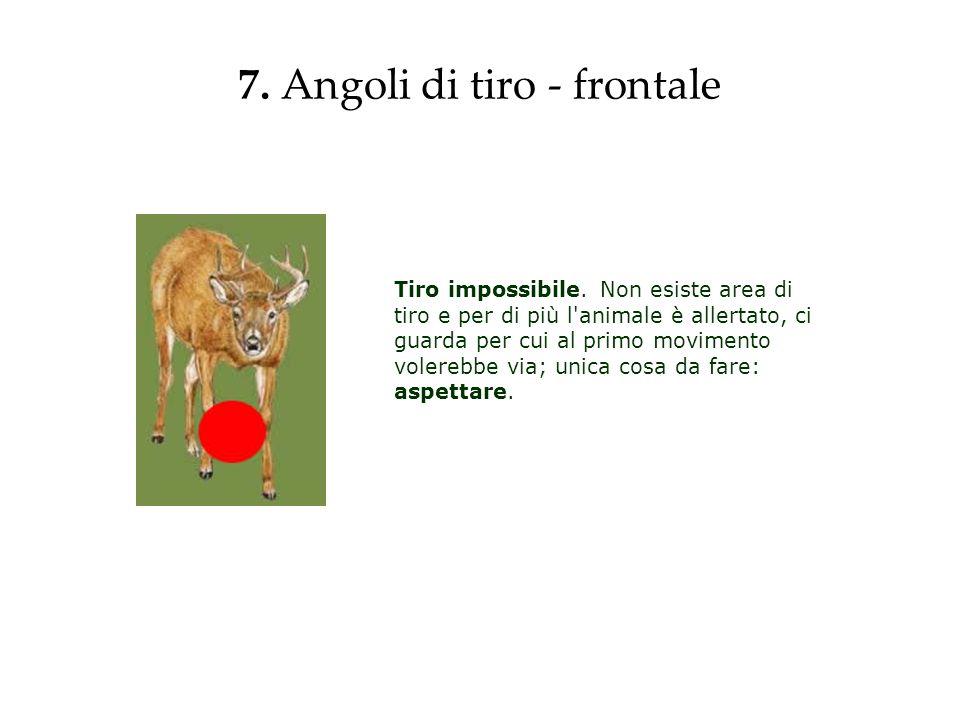 7. Angoli di tiro - frontale Tiro impossibile. Non esiste area di tiro e per di più l'animale è allertato, ci guarda per cui al primo movimento volere