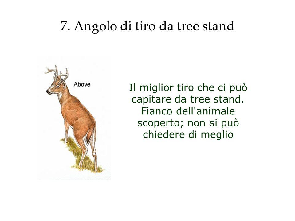 7. Angolo di tiro da tree stand Il miglior tiro che ci può capitare da tree stand. Fianco dell'animale scoperto; non si può chiedere di meglio