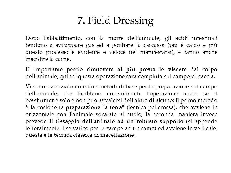 7. Field Dressing Dopo l'abbattimento, con la morte dell'animale, gli acidi intestinali tendono a sviluppare gas ed a gonfiare la carcassa (più è cald