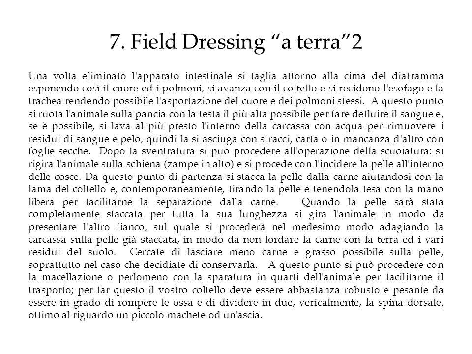 7. Field Dressing a terra2 Una volta eliminato l'apparato intestinale si taglia attorno alla cima del diaframma esponendo così il cuore ed i polmoni,