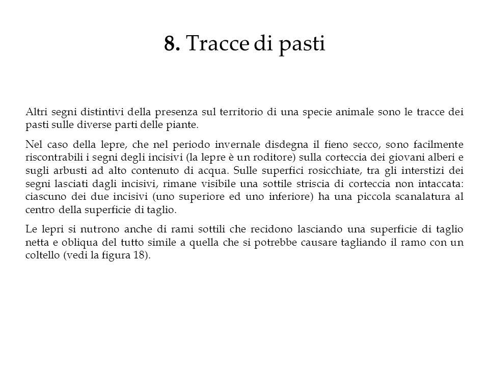8. Tracce di pasti Altri segni distintivi della presenza sul territorio di una specie animale sono le tracce dei pasti sulle diverse parti delle piant
