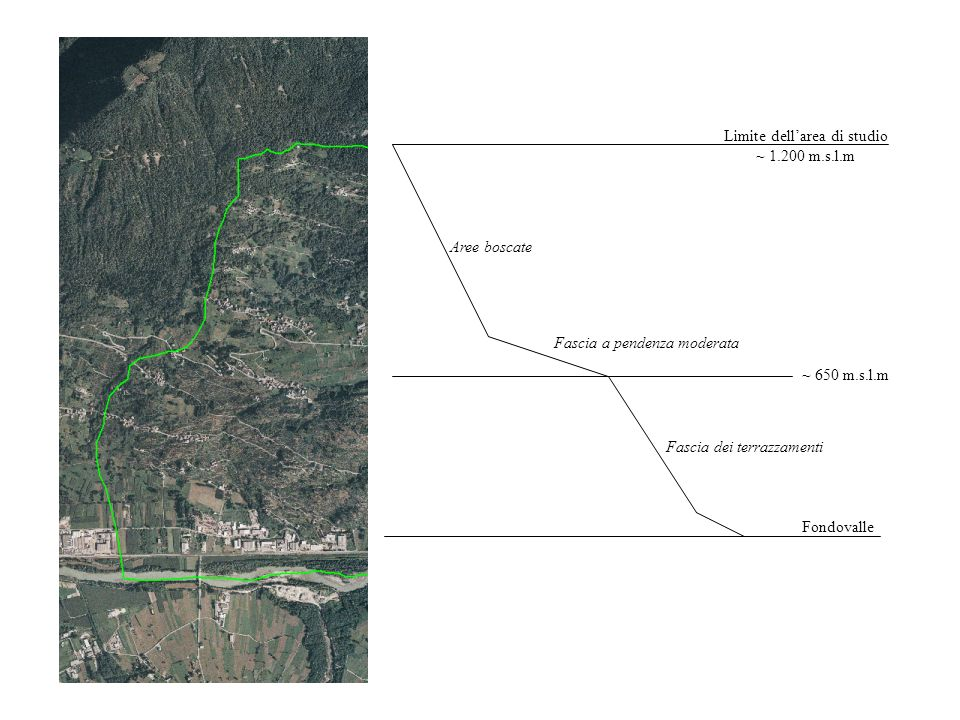 Fondovalle Fascia dei terrazzamenti Limite dellarea di studio ~ 1.200 m.s.l.m ~ 650 m.s.l.m Fascia a pendenza moderata Aree boscate