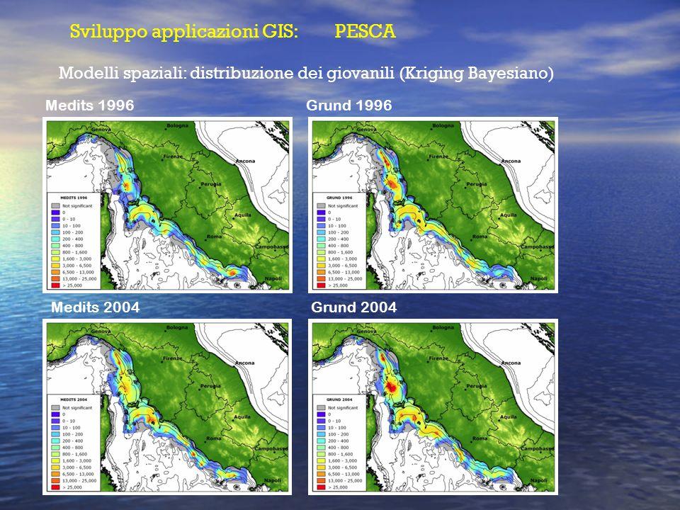 Modelli spaziali: distribuzione dei giovanili (Kriging Bayesiano) Medits 1996 Medits 2004 Grund 1996 Grund 2004 Sviluppo applicazioni GIS: PESCA