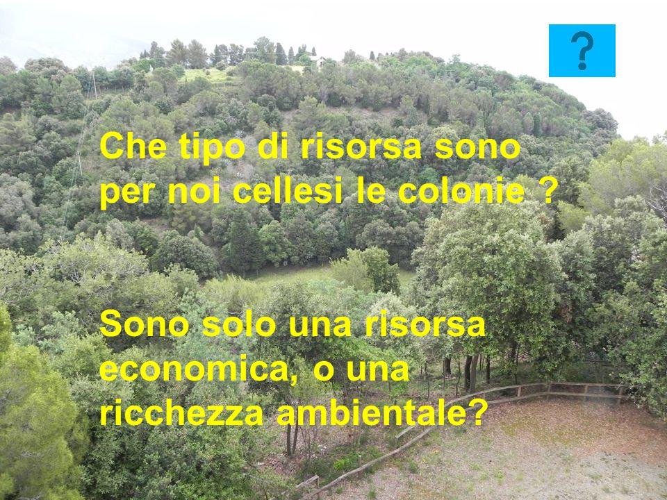 18 Che tipo di risorsa sono per noi cellesi le colonie ? Sono solo una risorsa economica, o una ricchezza ambientale?