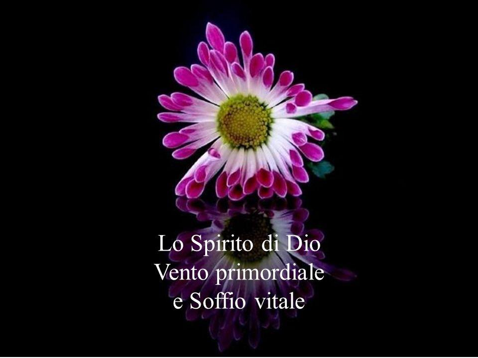Lo Spirito di Dio Vento primordiale e Soffio vitale