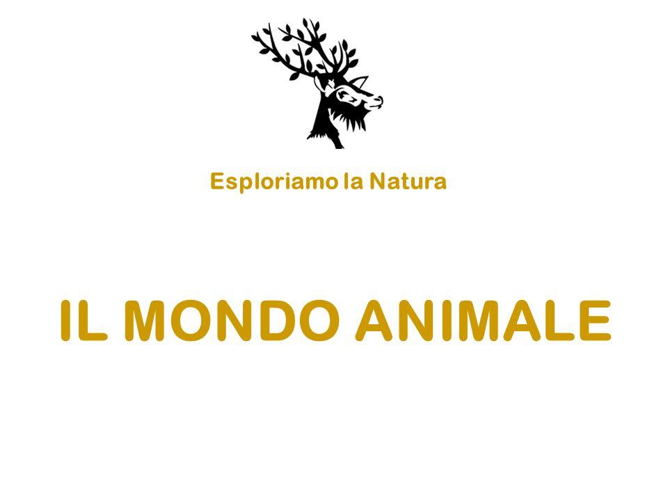 Esploriamo la Natura IL MONDO ANIMALE
