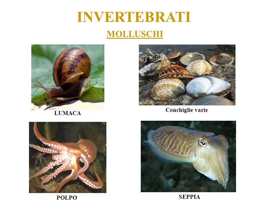 INVERTEBRATI MOLLUSCHI LUMACA POLPO Conchiglie varie SEPPIA