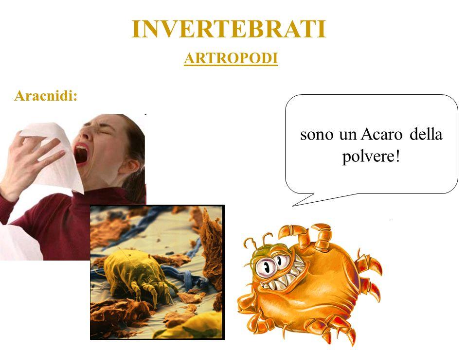 ARTROPODI INVERTEBRATI Aracnidi: sono un Acaro della polvere!