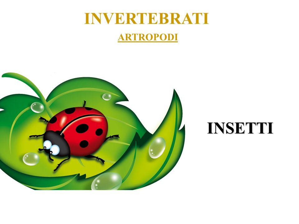 ARTROPODI INVERTEBRATI INSETTI