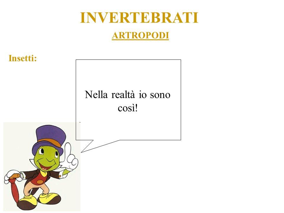 ARTROPODI INVERTEBRATI Insetti: Nella realtà io sono così!