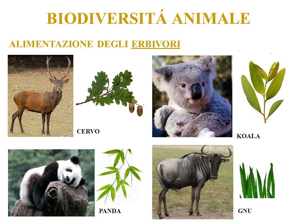 BIODIVERSITÁ ANIMALE ALIMENTAZIONE DEGLI ERBIVORI CERVO KOALA PANDAGNU