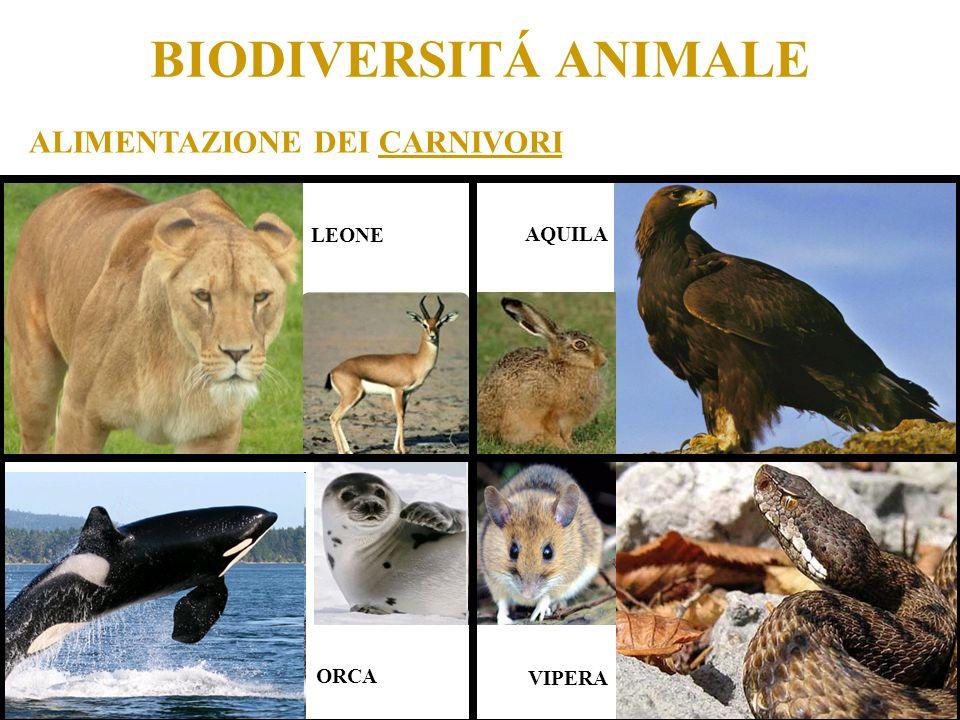 BIODIVERSITÁ ANIMALE ALIMENTAZIONE DEI CARNIVORI LEONE AQUILA ORCA VIPERA