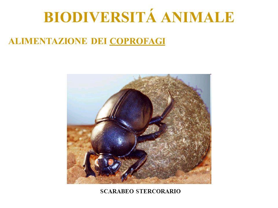 BIODIVERSITÁ ANIMALE COME SI CLASSIFICANO GLI ANIMALI? A SANGUE CALDO A SANGUE FREDDO
