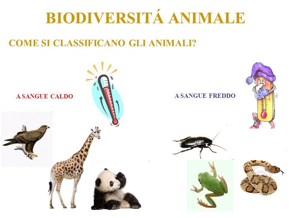 COME SI CLASSIFICANO GLI ANIMALI.