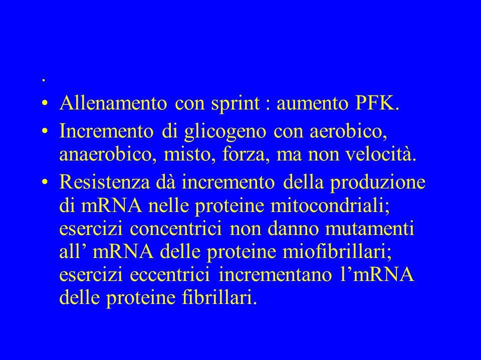 . Allenamento con sprint : aumento PFK. Incremento di glicogeno con aerobico, anaerobico, misto, forza, ma non velocità. Resistenza dà incremento dell