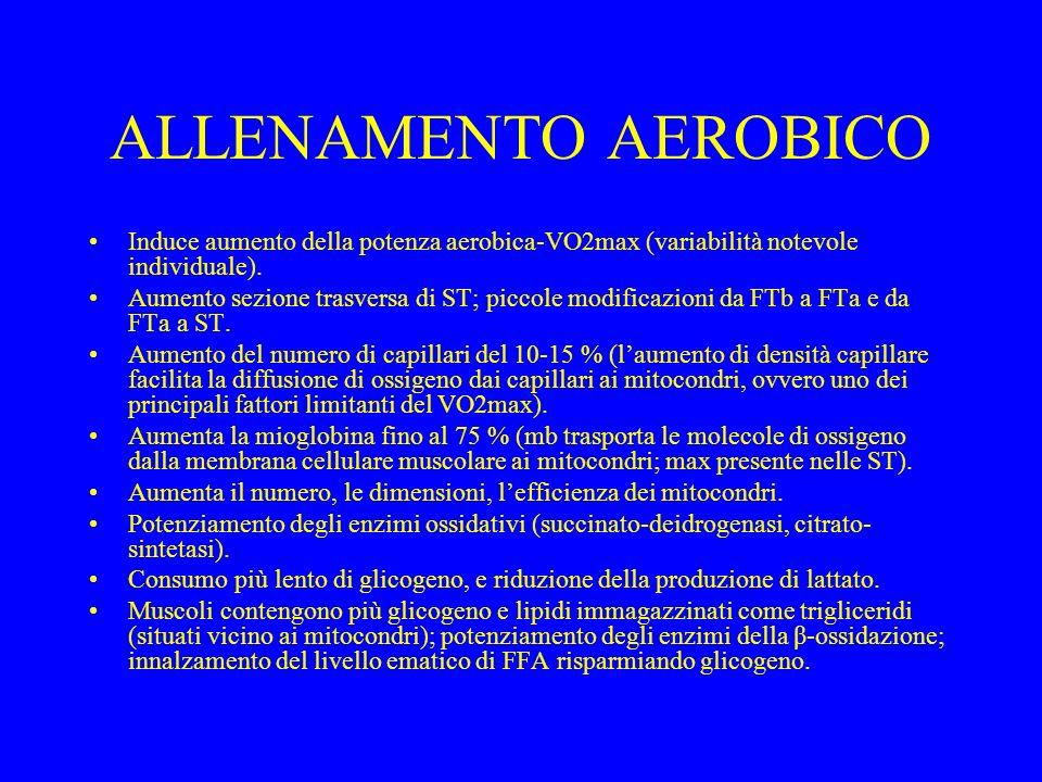 ALLENAMENTO AEROBICO Induce aumento della potenza aerobica-VO2max (variabilità notevole individuale). Aumento sezione trasversa di ST; piccole modific
