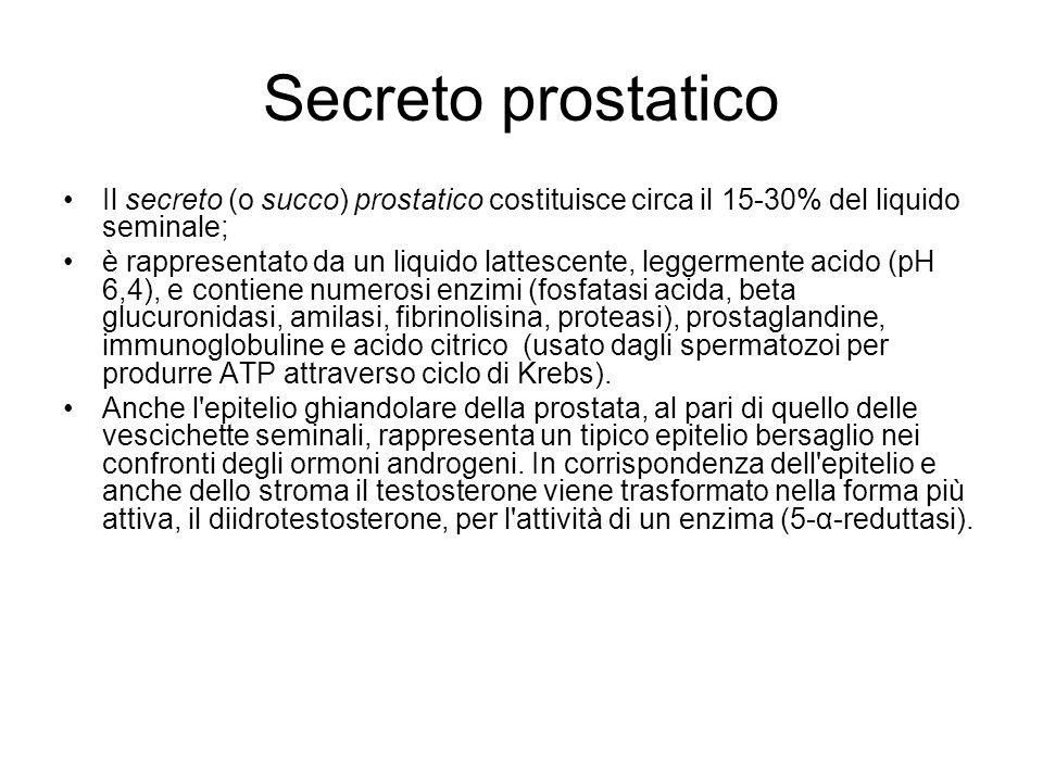 Secreto prostatico Il secreto (o succo) prostatico costituisce circa il 15-30% del liquido seminale; è rappresentato da un liquido lattescente, legger