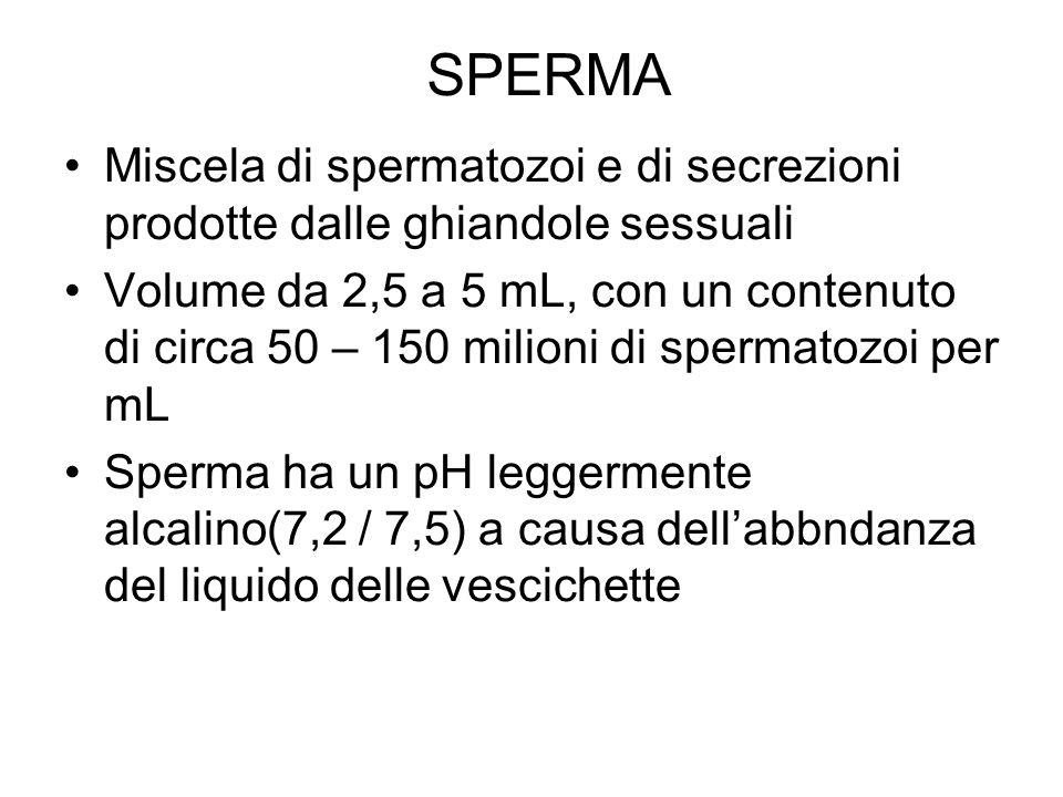SPERMA Miscela di spermatozoi e di secrezioni prodotte dalle ghiandole sessuali Volume da 2,5 a 5 mL, con un contenuto di circa 50 – 150 milioni di sp