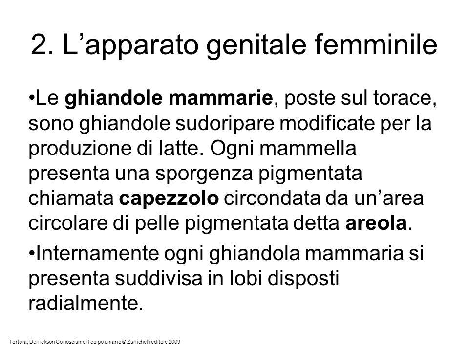 2. Lapparato genitale femminile Le ghiandole mammarie, poste sul torace, sono ghiandole sudoripare modificate per la produzione di latte. Ogni mammell