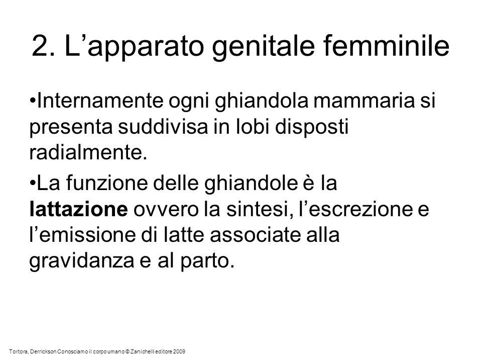2. Lapparato genitale femminile Internamente ogni ghiandola mammaria si presenta suddivisa in lobi disposti radialmente. La funzione delle ghiandole è
