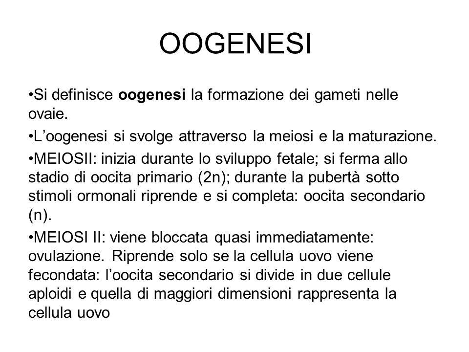 OOGENESI Si definisce oogenesi la formazione dei gameti nelle ovaie. Loogenesi si svolge attraverso la meiosi e la maturazione. MEIOSII: inizia durant