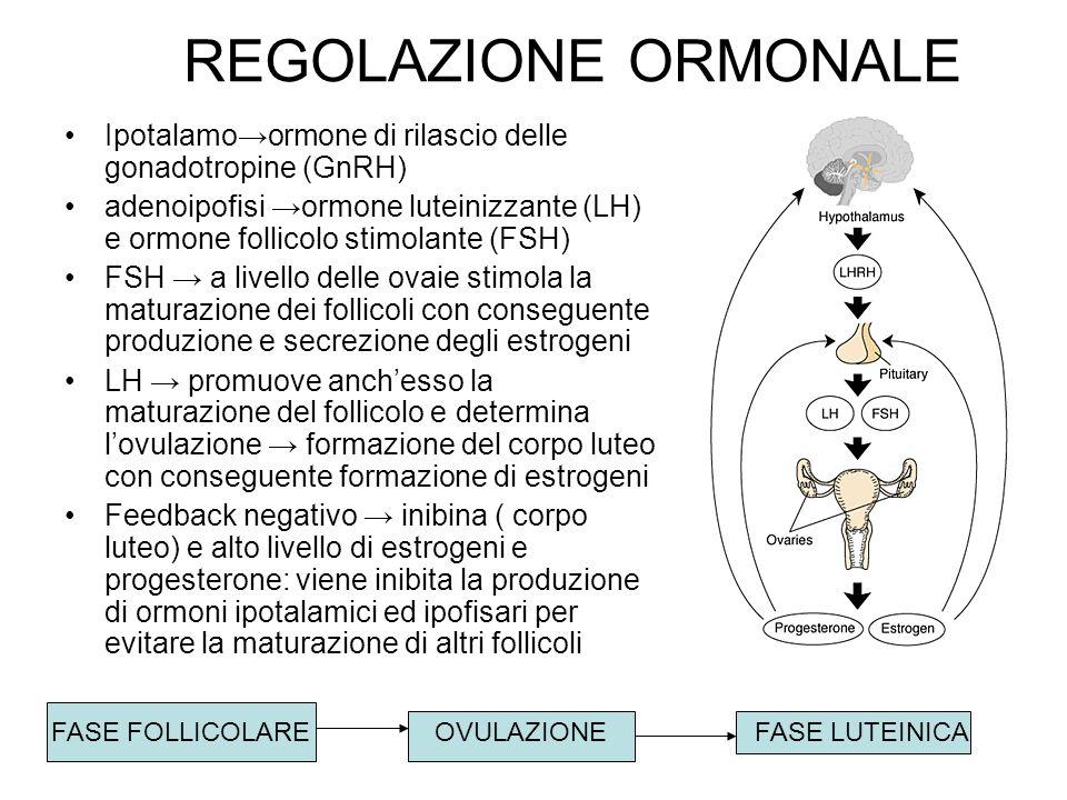 REGOLAZIONE ORMONALE Ipotalamoormone di rilascio delle gonadotropine (GnRH) adenoipofisi ormone luteinizzante (LH) e ormone follicolo stimolante (FSH)