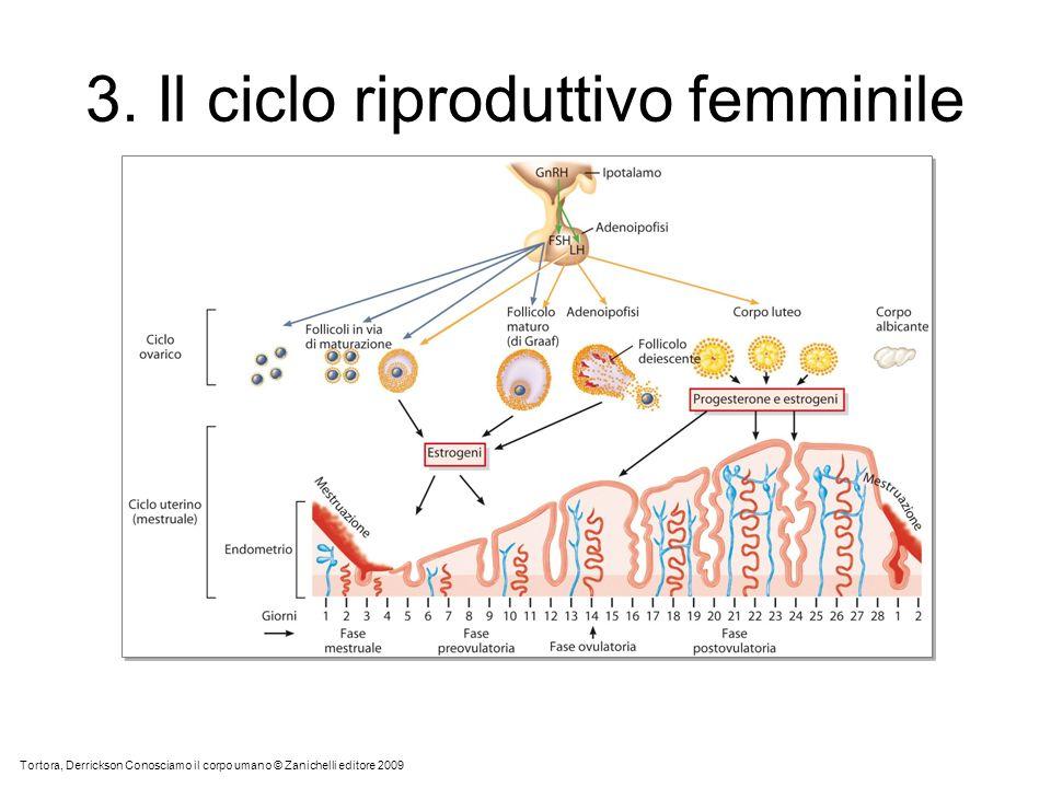 3. Il ciclo riproduttivo femminile Tortora, Derrickson Conosciamo il corpo umano © Zanichelli editore 2009